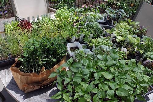 seedlings IMG_2412