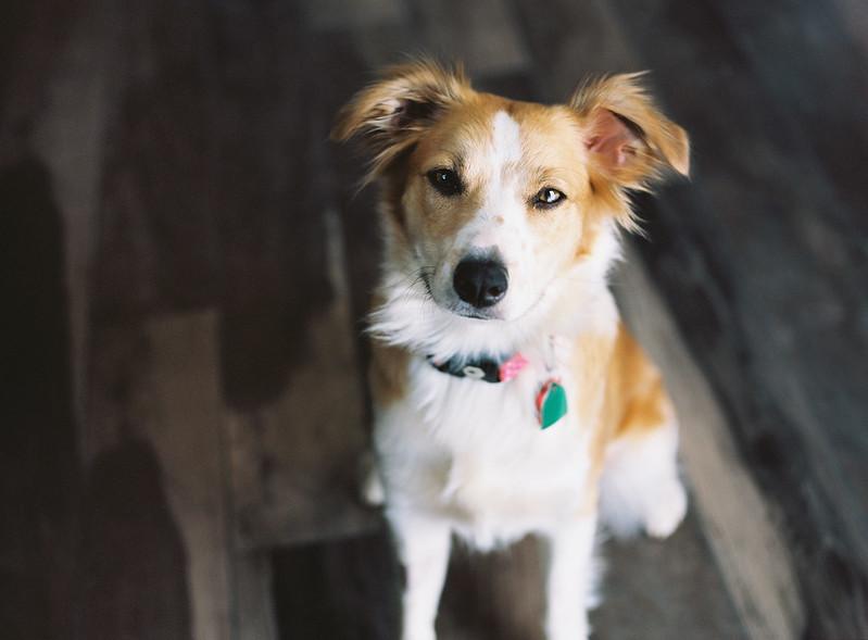 Kiko, Australian Shepherd Mix