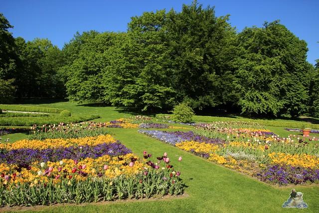 Britzer Garten Tulipan 15.05.2015  49