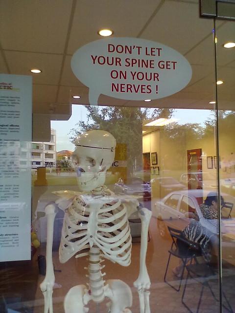Skeleton nerve on spine