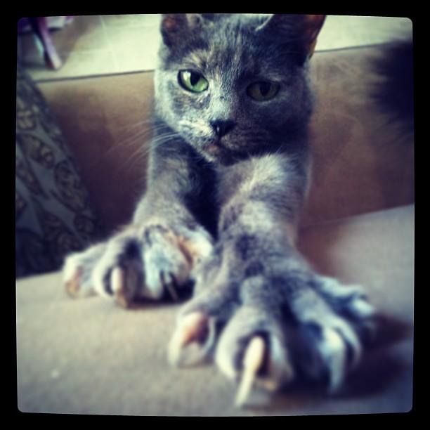 Rawr cat