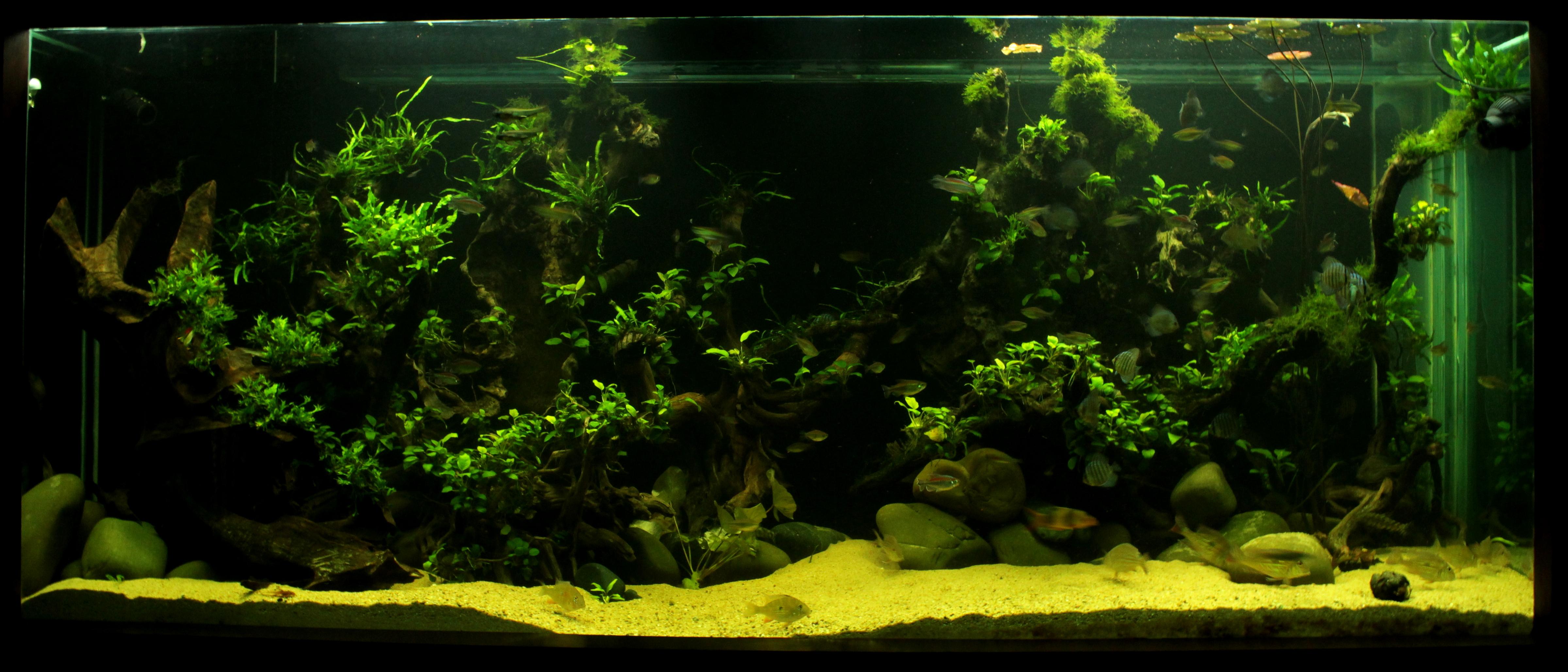 Kolkata Aquarium Club • View topic 8 foot 600 gallon low tech
