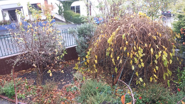3 of 12: the winds gave stolen our autumn colour