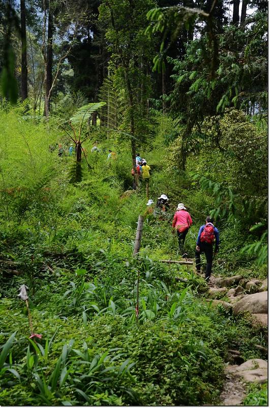 鳳凰山登山步道 2