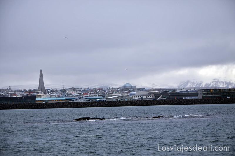 excursión buscando ballenas en islandia