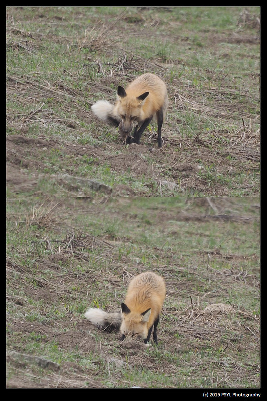 2015-05-21-Fox