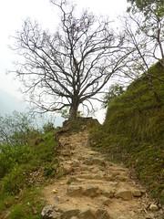 Der Baum am Ende des Weges