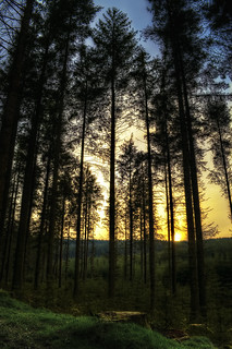 Fernworthy forest sunset | by Roan Manion Images