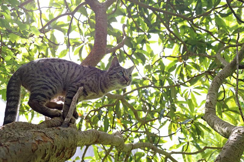 Tree dwelling Gabriel