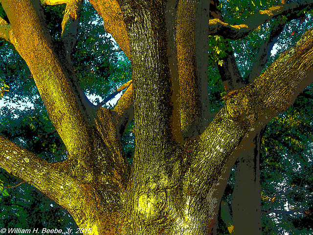 sundown on the oaks