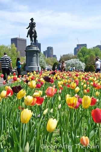 150510d Boston Public Garden 83