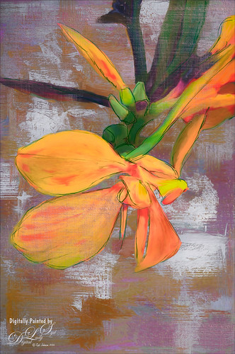 Image of an orange Canna Lily