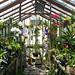 My warm greenhouse (Explore 4/412 #187)