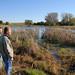 Wetland to Reduce Runoff