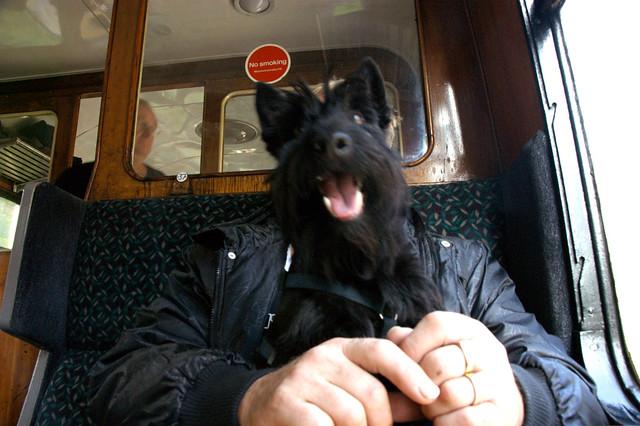 Half man, half dog   Flickr - Photo Sharing! - photo#9
