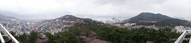 Sakura Hill