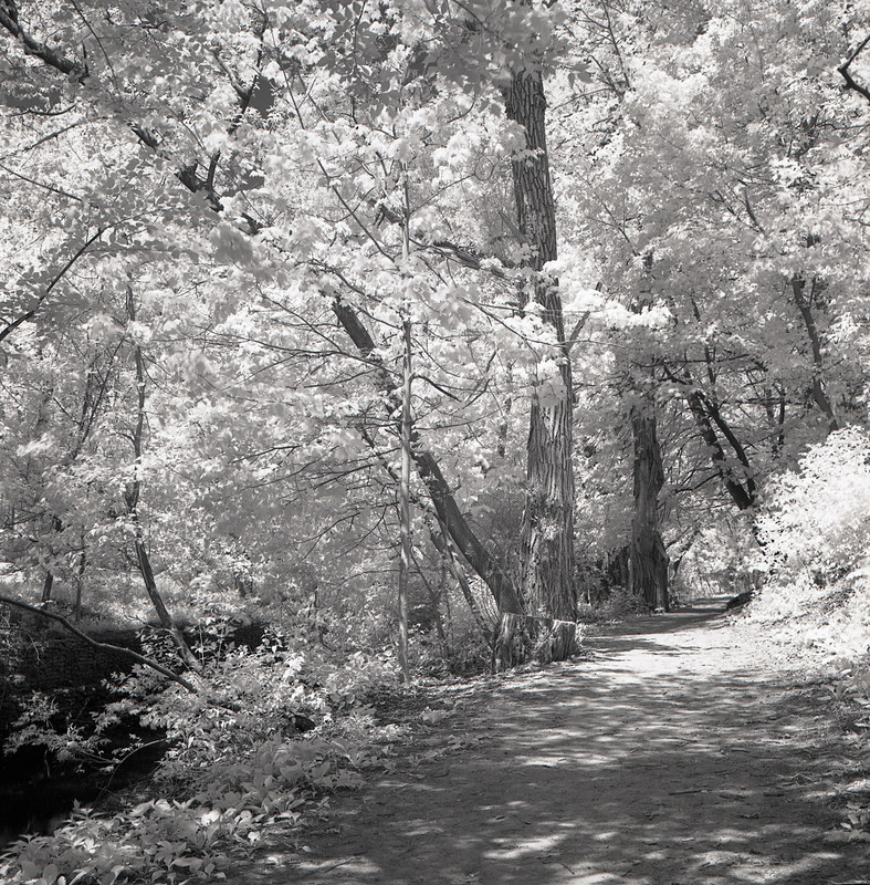Taylor Creek Infrared