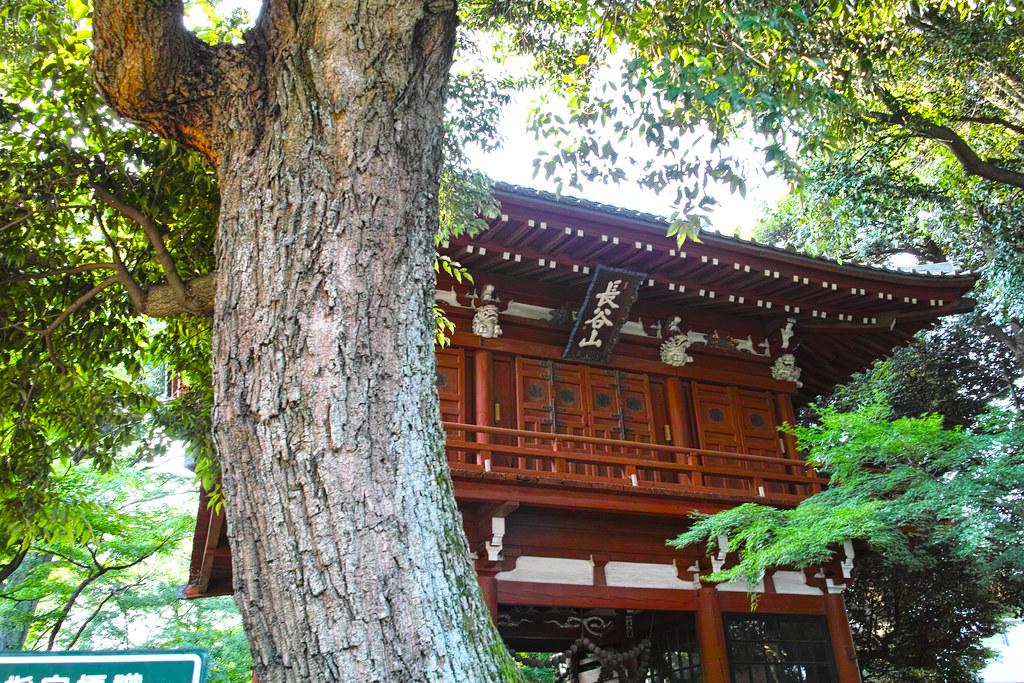 本土寺 門