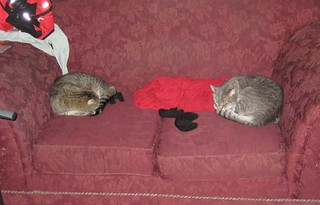 Two counterclockwise cats