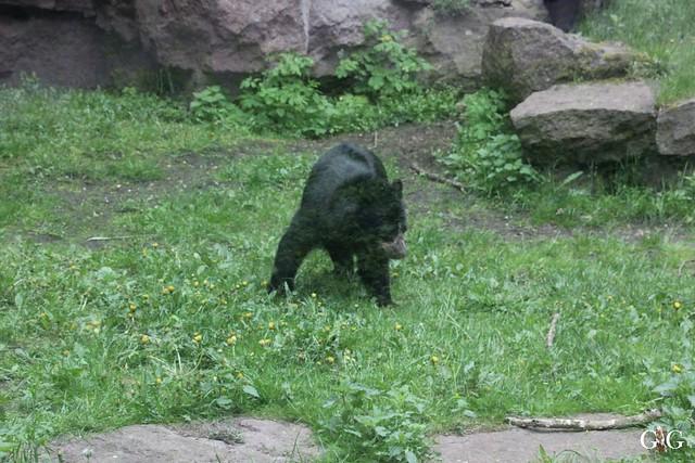 Tierpark Friedrichsfelde 10.05.20152