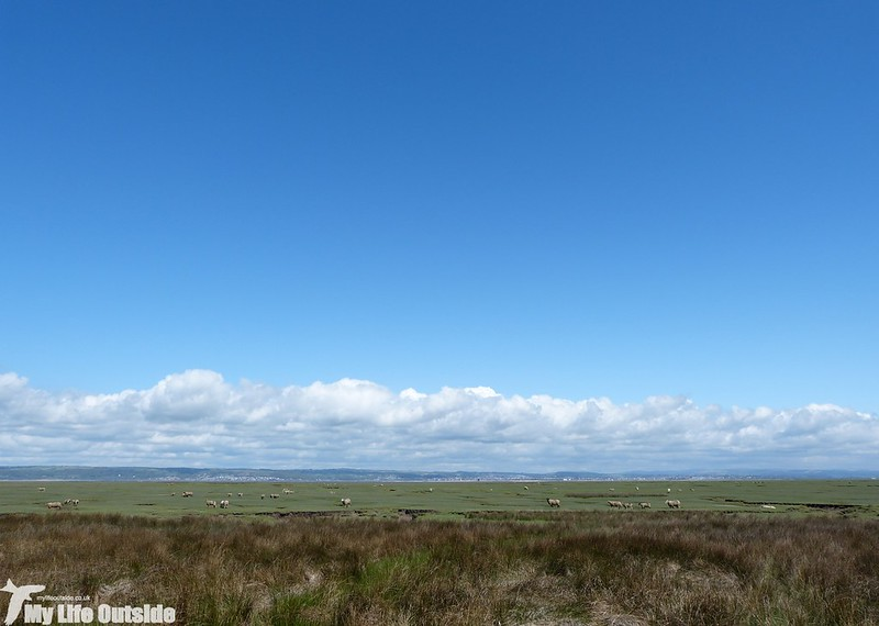 P1120677 - Landimore Marsh