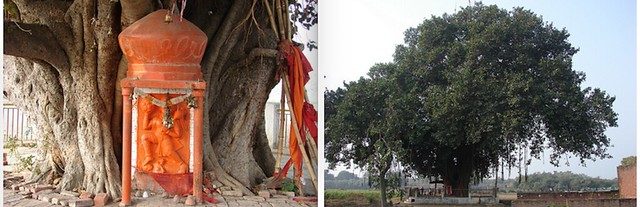 Nagla Khushhali having a ~300 years old great holistic banyan tree with called  हनुमान बरी (Hanumaan Bari). A place where lord Shri Hanuman murti (statue) originated from banyan(वट वृक्ष, बरगद) tree