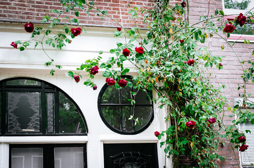 Amsterdam, Jordaan in Boom