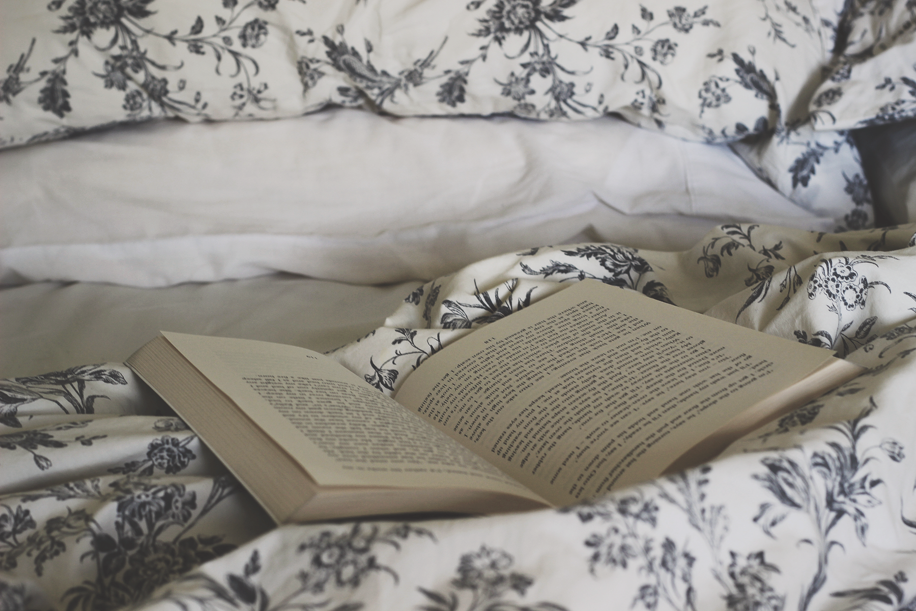 Cosy, Bramble and Thorn, Rain, Storm, Winter, Reading, Bed, Book, Tea