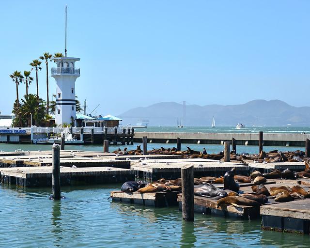 Leones marinos del pier 39 de San Francisco