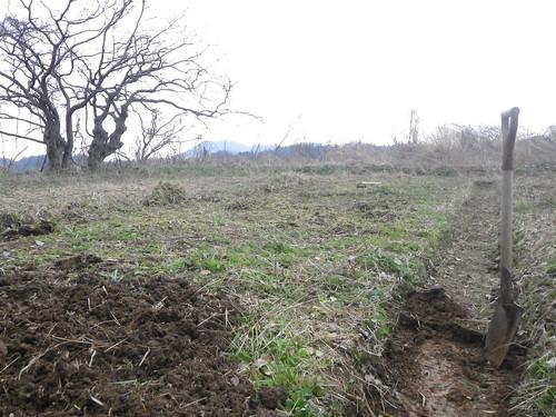 ジャガイモ1.排水性が悪いので高畝に改造