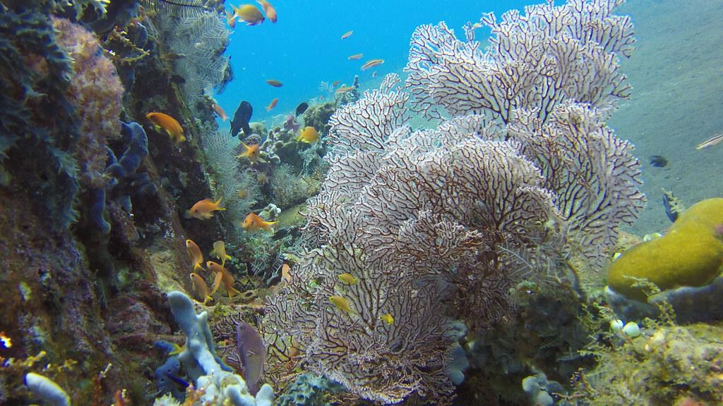 2015-05-06 Bali 083