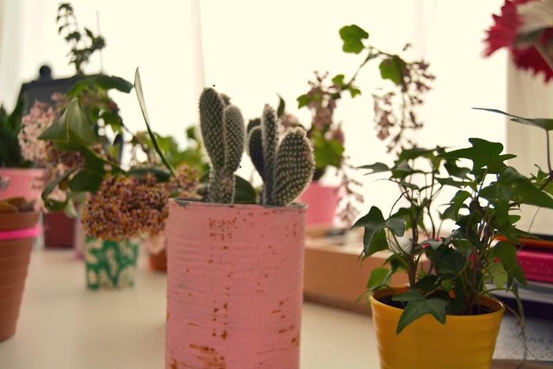plantas en el escritorio 1