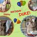 Happy 9th Birthday, Duke!