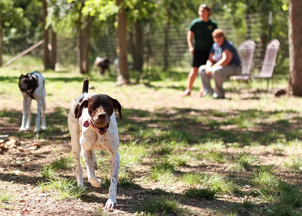 Dog Rescue Austin Tx