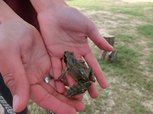 2015-05-25 10.35.47 grenouille