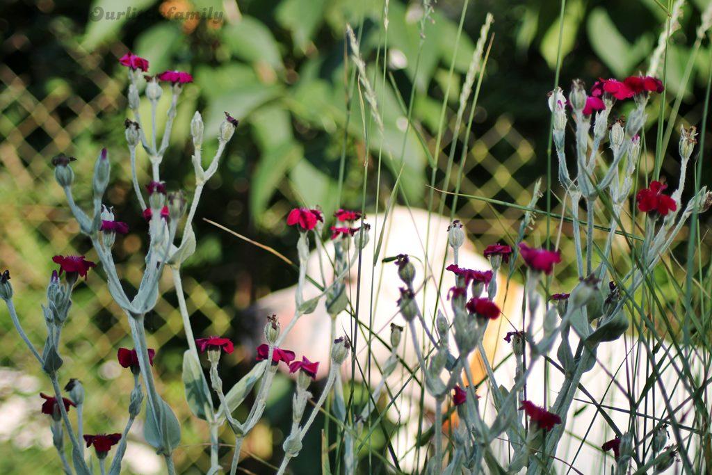 mon jardin 16