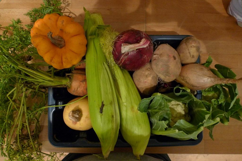 Harvest 5 November 2011