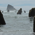 The Neskowin Ghost Forest v