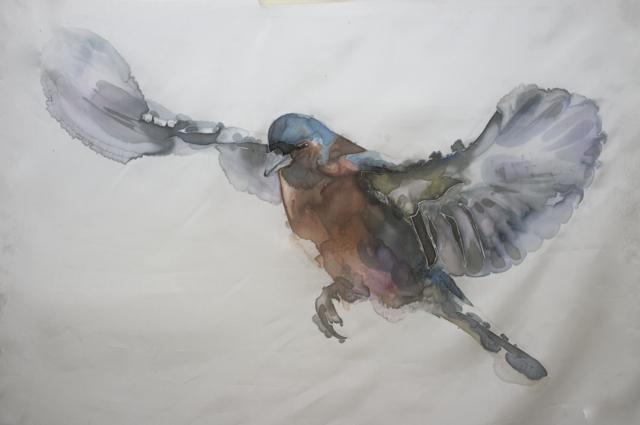 GH Birds 8