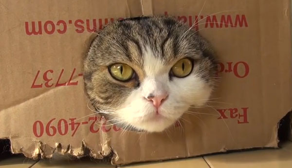 cats-love-boxes-and-bags