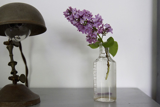 keeping lilacs alive   reading my tea leaves