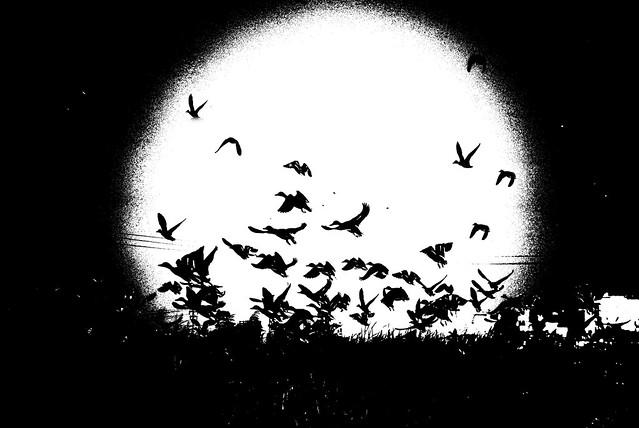 El vuelo de los sueños, de Marcela Escandell en Flickr.