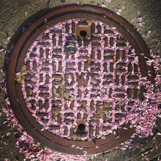 FINALLY | Manhole cover New York cherry blossoms