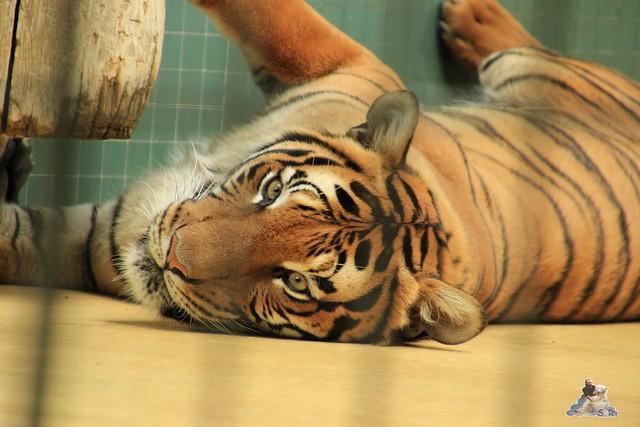 Zoo Berlin 13.05.2015  51