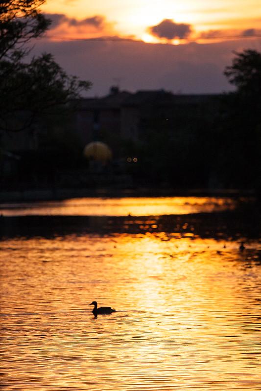 沐浴夕陽下