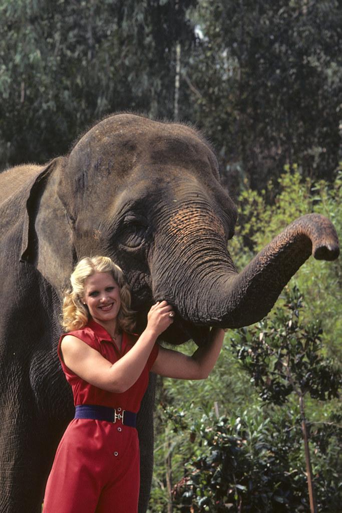 joan embery  u0026 elephant