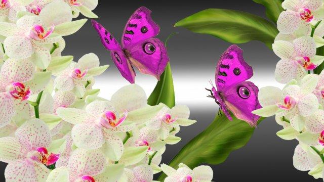 orchids-butterflies-bright-220249