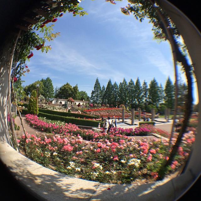 fish eye lens♡ #荒牧バラ園 #伊丹 #兵庫 #aramakirosepark #itami #hyogo