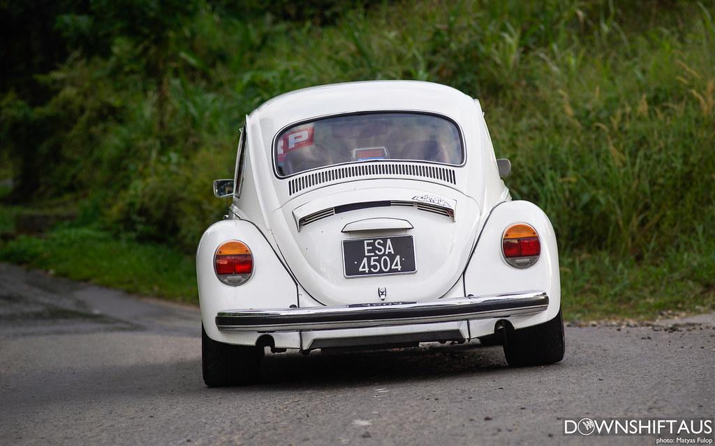 Borneo Bug