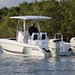 Twin Vee 260 SE - 19